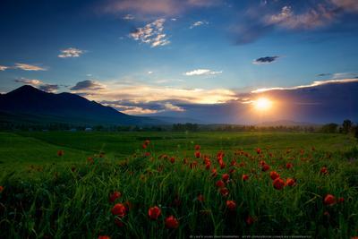 Таинство весеннего вечера киргизия бишкек ала-тоо горы май маки горные цветы lazy_vlad lazyvladphoto