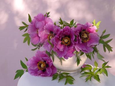 ***Сами собой стихи срываются с губ — цветут пионы. Ёса Бусон