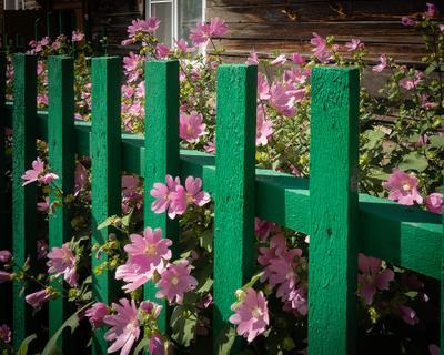 Есть ли жизнь за забором?
