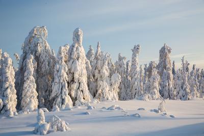 *Стражи зимы** снег деревья