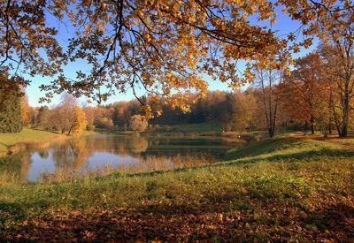 Опадает листва потихоньку...