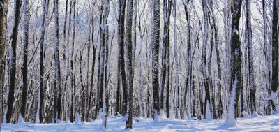 ***на склонах Чатыр-Дага крым Чатыр-Даг зима лес