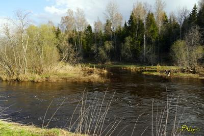 Островок на реке река природа пейзаж весна