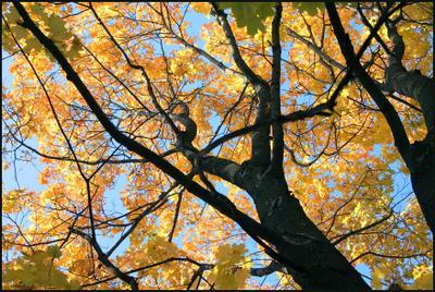 Осень - фрактальная пора... Мандельброт Жюлиа Осень