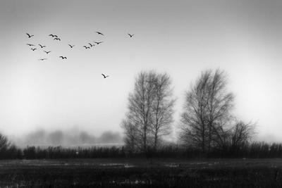 Пустые деревья