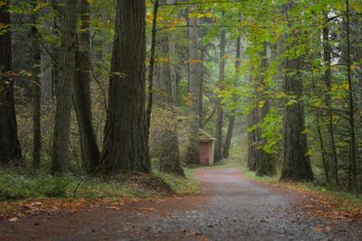 *** лес тропинка осень листопад