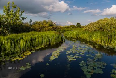 На Чёрной речке летний пейзаж река