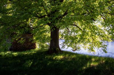 Весной на реке весна май река дерево дрова