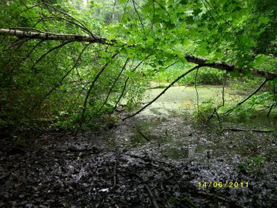 Старый пруд Битца лес лето