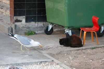 Наглость - второе счастье кот уличный обед