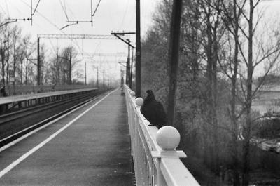 *** Санкт-Петербург голубь платформа железная дорога пленка