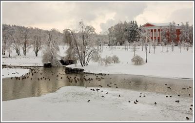 Зимняя сказка. зима пруд утки прогулка
