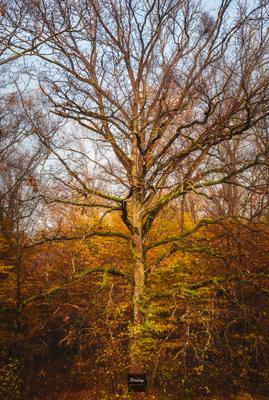 Просто форма и просто краски лес деревья