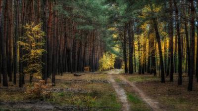 Пламя осени. осень пейзаж лес