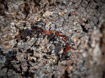 Обмен информацией Макро муравьи