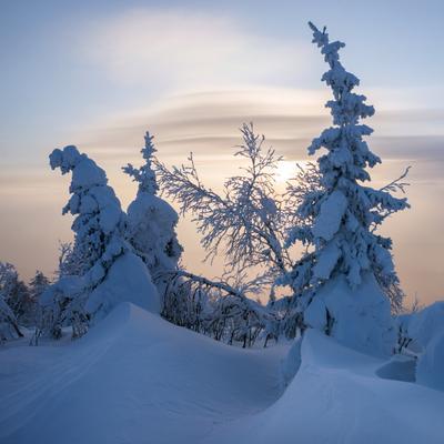 Зимний пейзаж в квадрате Зима снег рассвет деревья иней