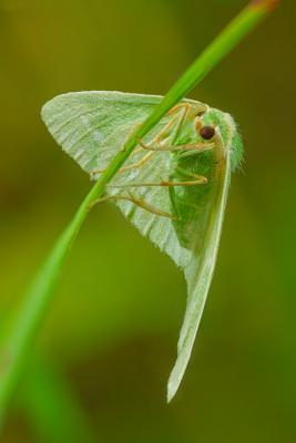 моль моль насекомое трава