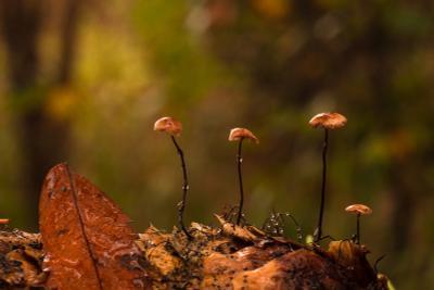 /На шишке/ макро грибы шишка