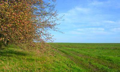 Яблоневый цвет. Яблоневый цвет Цветение Сад Весна Поле Небо