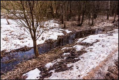 Еще в полях белеет снег ... Измайловский лес