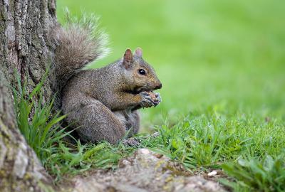 ...и орешки все грызет.