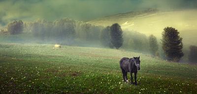 Altay morning алтай утро рассвет туман лошадь пейзаж трава деревья природа