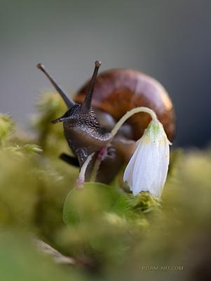 Пришелец / An Alien canon canonrussia natgeo natgeorussia canon6d2 macro macrophotography naturephotography snail alien ritam melgunov макро улитка макрофото ритам мельгунов