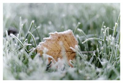 frost иней, трава, лист