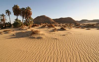 Оазис Оазис пустыня Египет
