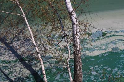 Цветущая река природа река водоросли