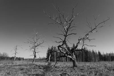 *** Сухостой лес поле трава