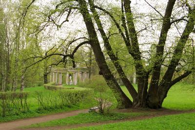 Холодная весна в парке Павловска Павловск парк весна