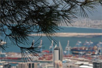 Взгляд через  сосны на порт Хайфы..((((