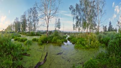 Восход на болотах болота лето утро восход панорама