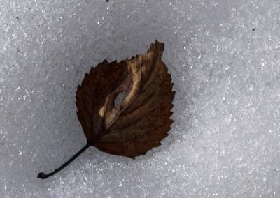 --- снег, лист, весна