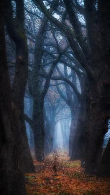 Таинственный лес Краснодар Кубань Россия природа город