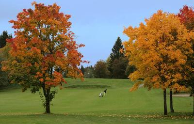 Осенний гольф гольф осень