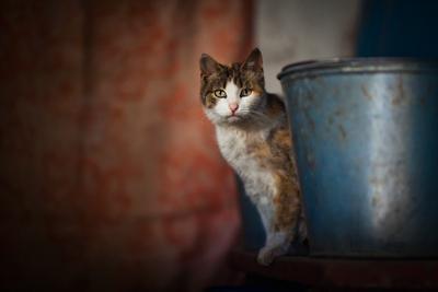 Манюня кошка
