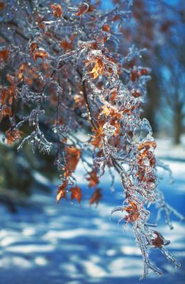 Музыка льда лед листья природа ледяной дождь