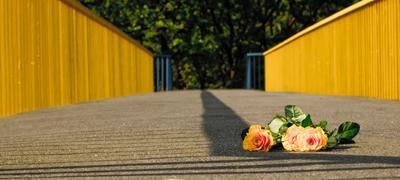 Розы розы, жёлтый