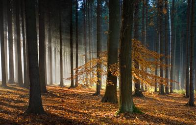 Осень в лесу лес туман осень лучи