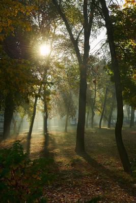 утро в Донецке Утро Донецк свет осень пейзаж городской