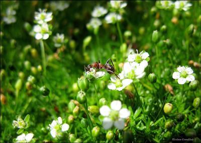 Так, что это у нас тут.. муравей макро цветы солнце