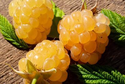 Жёлтая малина ягоды малина макро