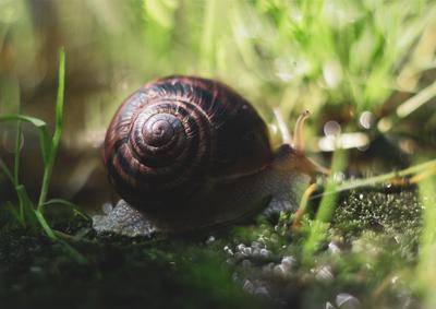Hidden Treasure snail shell water wet bokeh light shine horns yellow brown green house вода улитка раковина мокрый рожки боке свет deep sun moss мох ground helix спираль