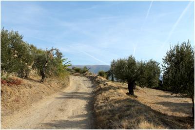 Афонскими дорогами Афон Греция дороги