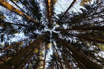Геометрия. лес деревья небо природа