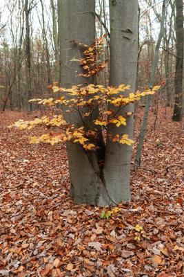 Осень Лес листва деревья