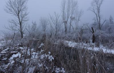 Ближний план, или что видно в тумане, или над ручьем утро туман ручей