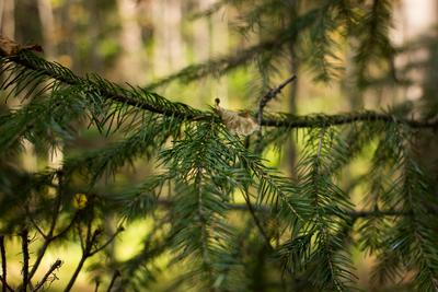 Ветки (twigs) 3 Ветки twigs Ревда природа лес деревья